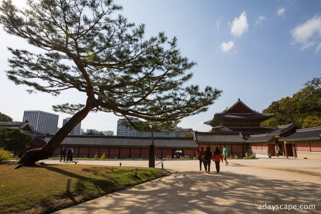 Changdeokgung Palace 05