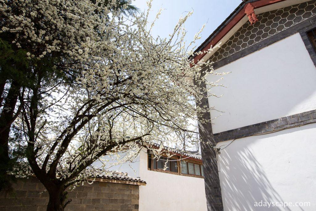 Baisha Village 12