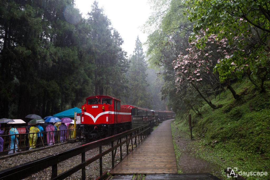 Alishan Forest Railway 5
